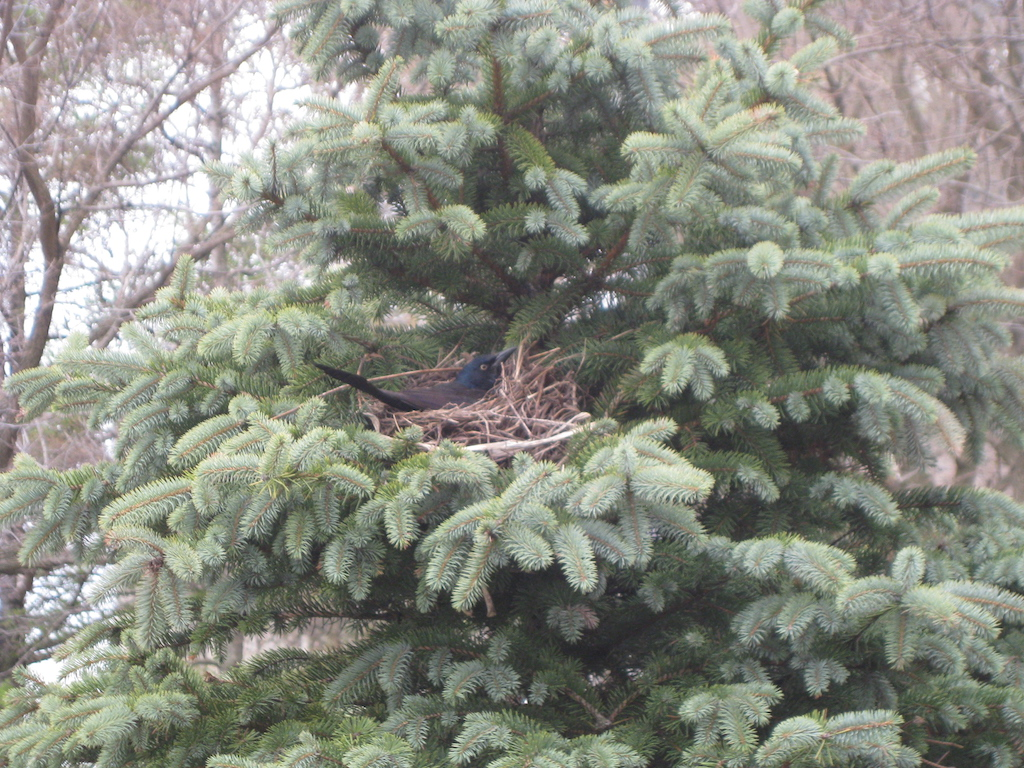 Bird nest at Toronto Music Garden