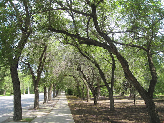 Tree-lined sidewalk