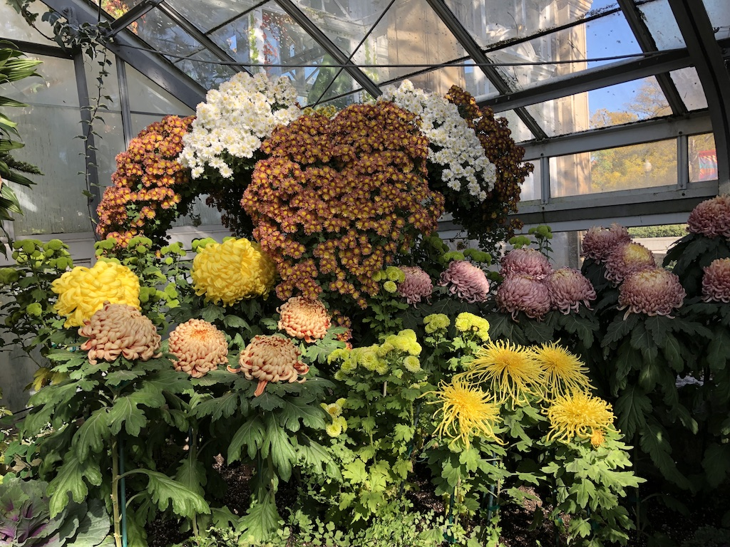 Gold and yellow chrysanthemums