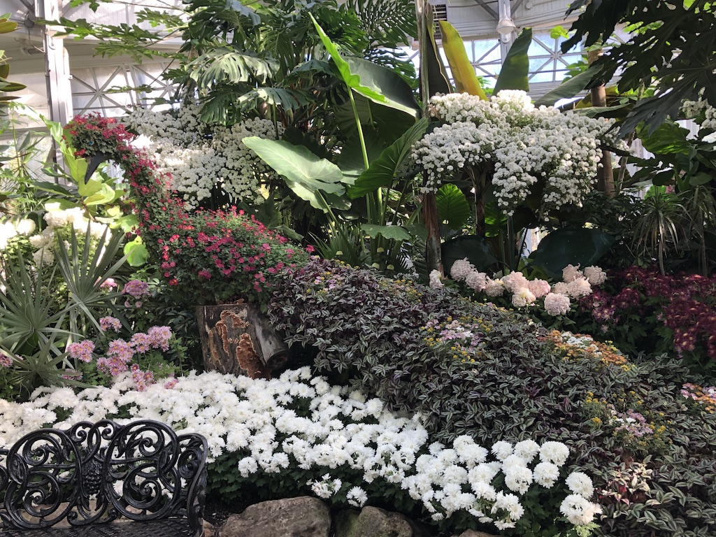 Peacock-shaped display of chrysanthemums