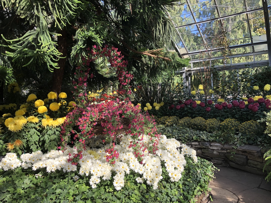 Basket display of chrysanthemums