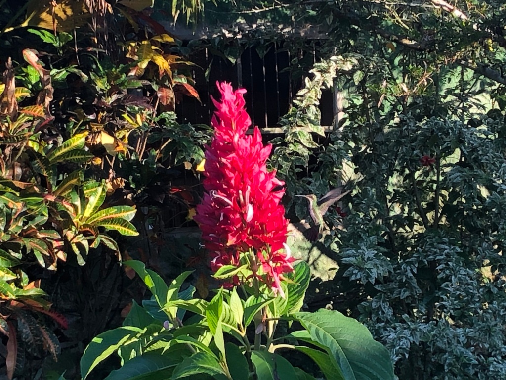 Hummingbird by a red flower
