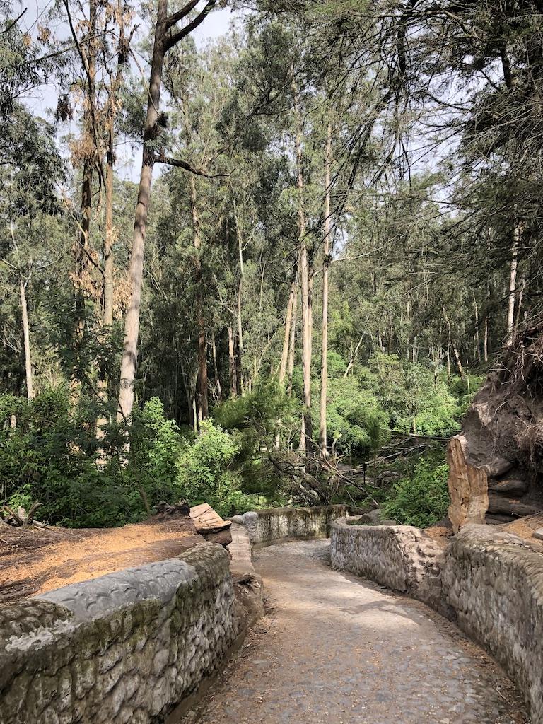 Peguche trail