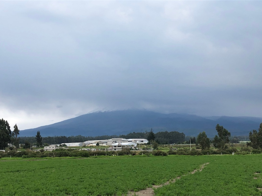 Snow-covered Cotopaxi volcano and rose plantations near its base