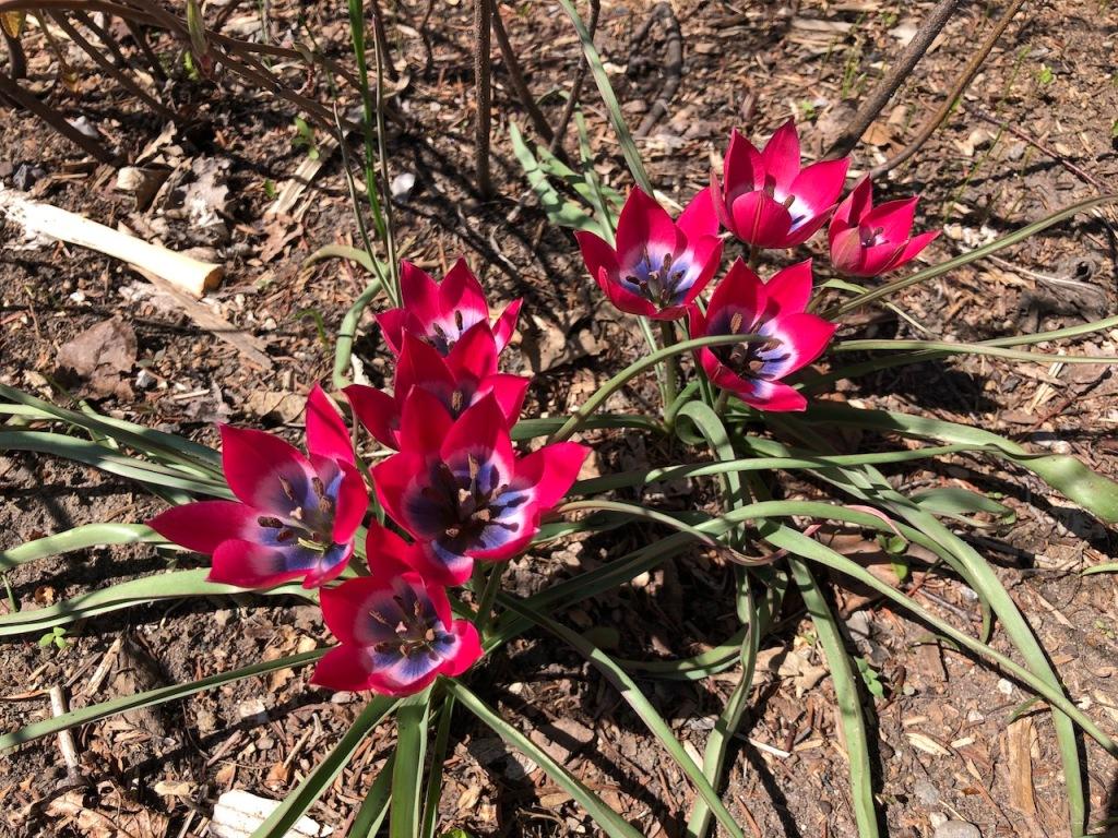 Mystery pretty flowers