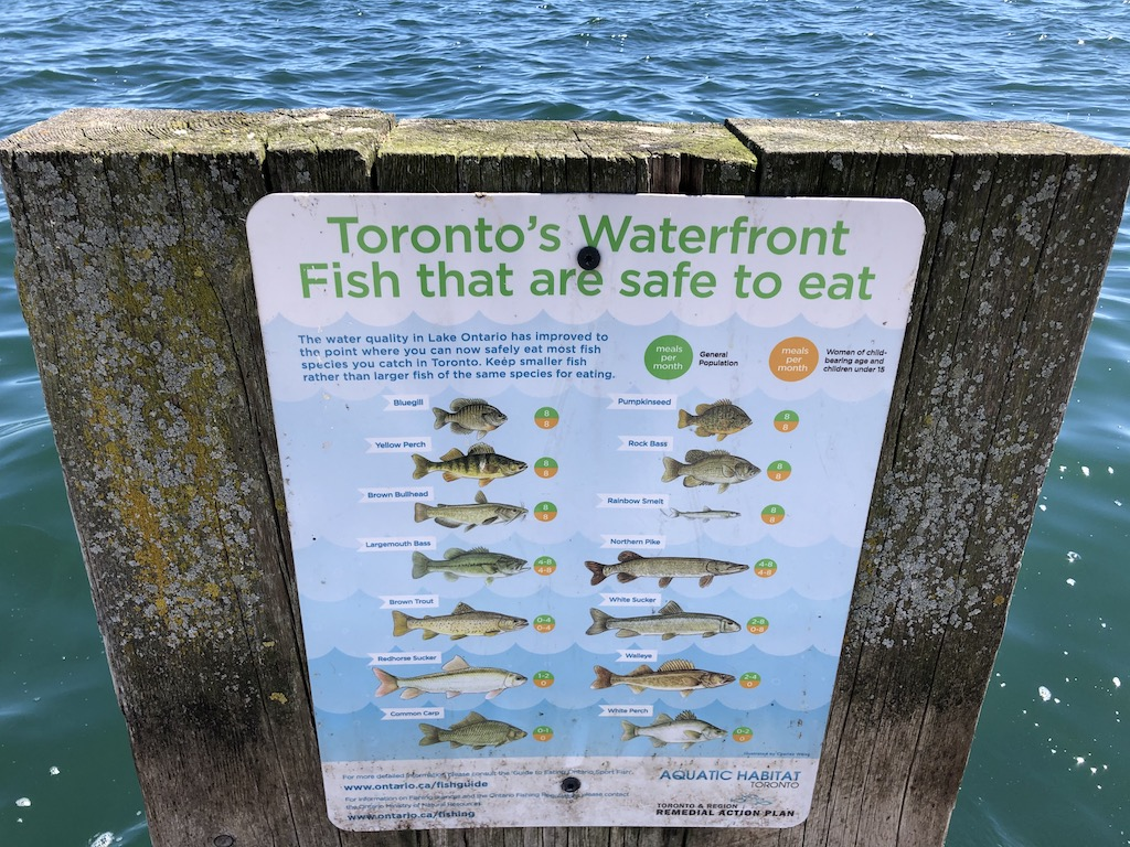 Toronto's Waterfront Fish that are safe to eat.