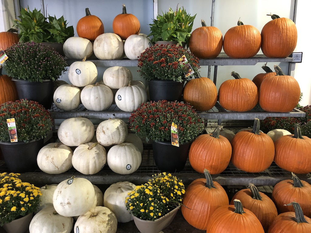 Potted mums and pumpkins.