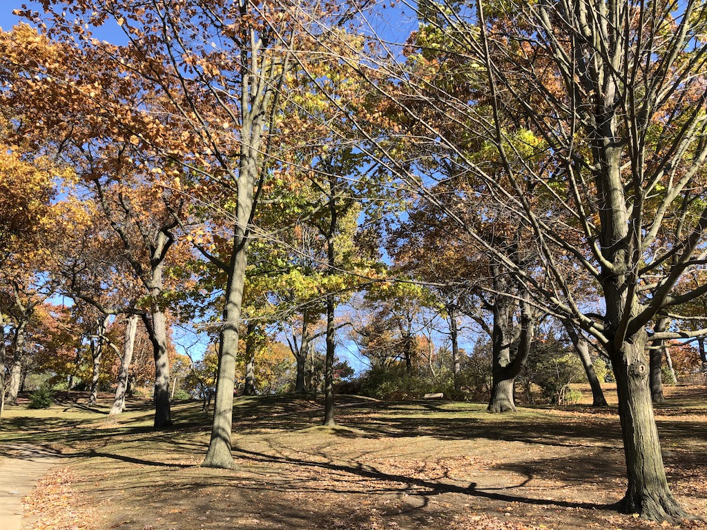 Hillside trails by Grenadier Pond
