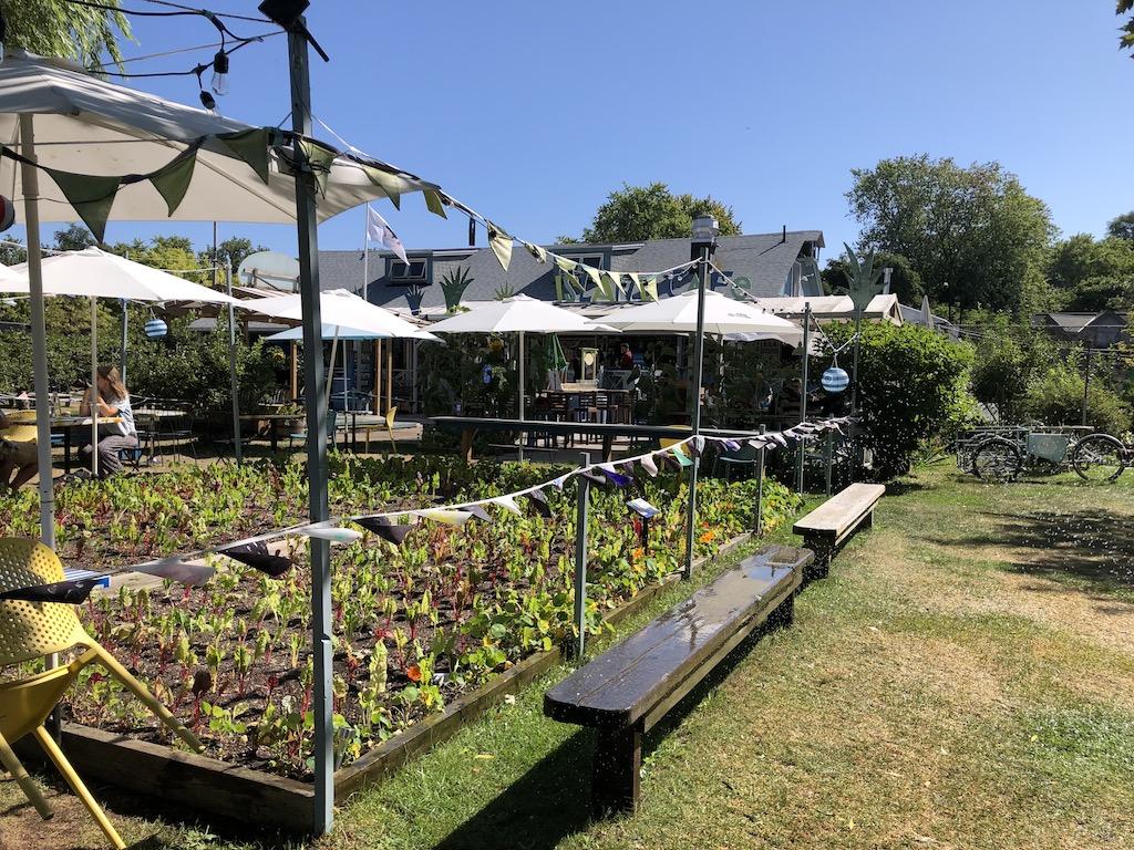 Kale garden.